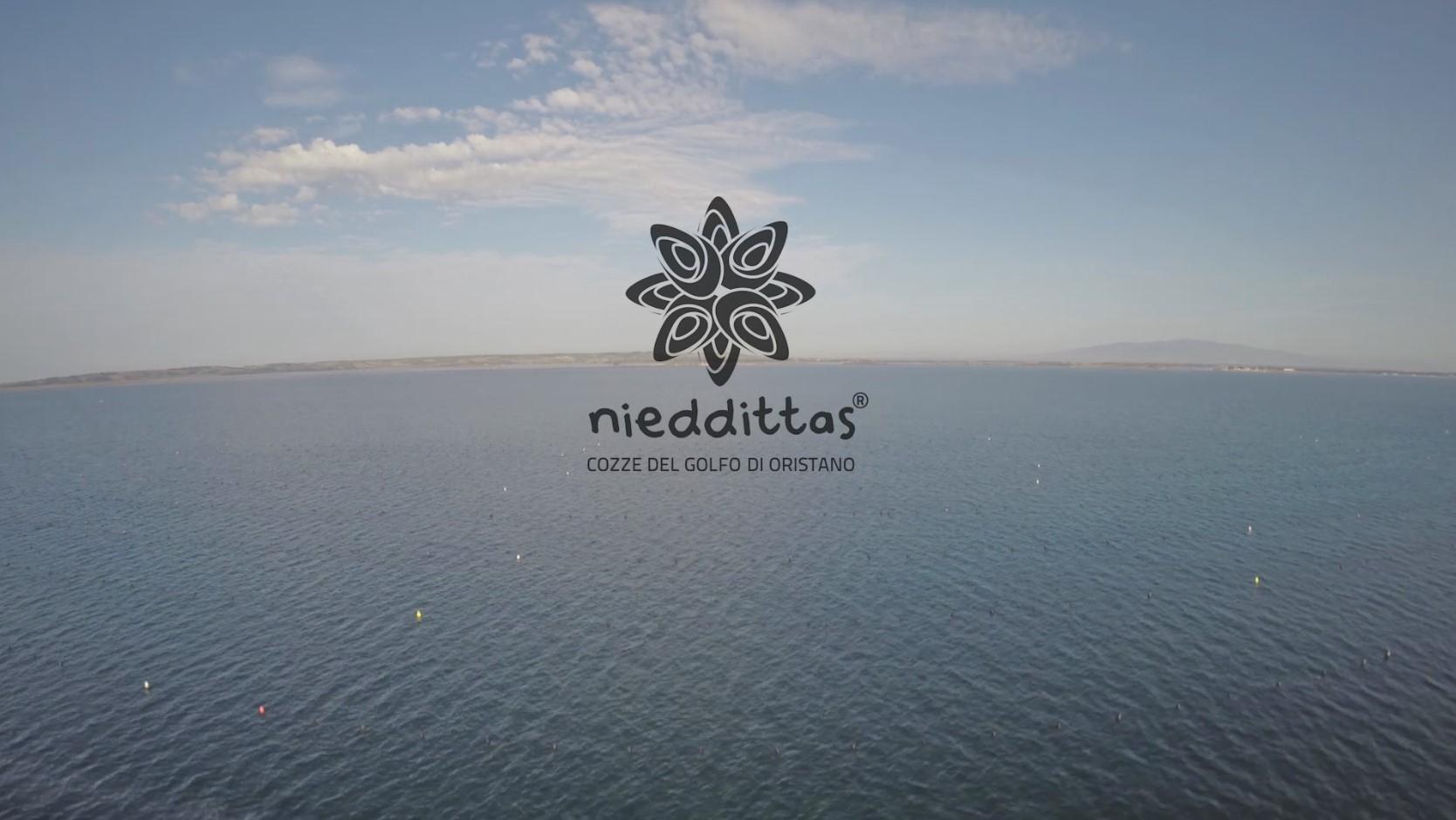 Il video della 1^ fase di lavorazione delle Nieddittas: l'allevamento.
