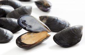 Cozze Nieddittas: nessuna traccia del vibrione del colera