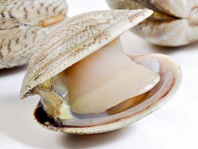 Lupini – small clams