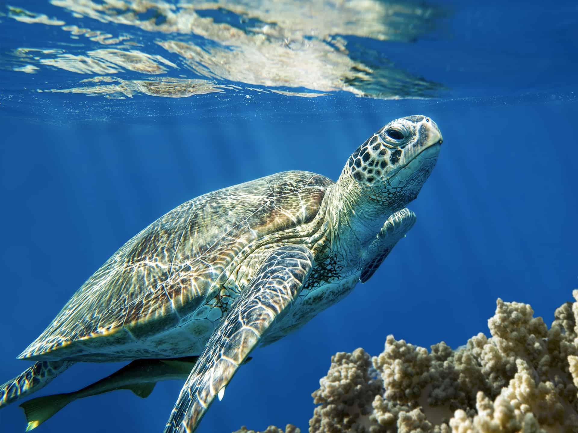 La vita del mare è la nostra vita.