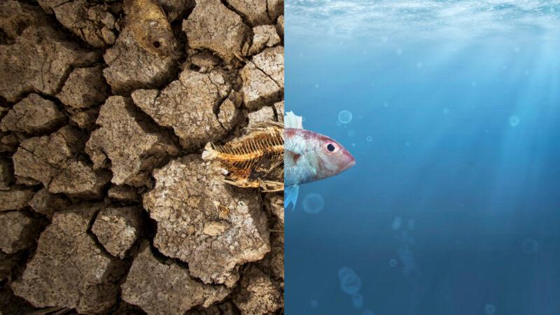 Che influenza ha il mare sul clima?