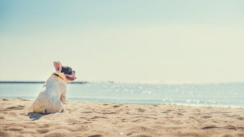 Prendere il sole in spiaggia fa bene ai cani?