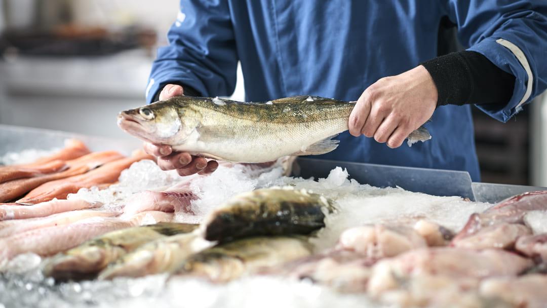 Quanti giorni si conserva il pesce in frigo?