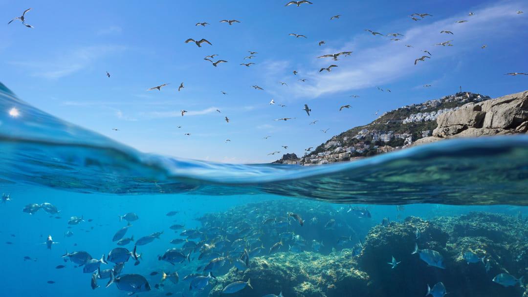 La flora e fauna del Mar Mediterraneo