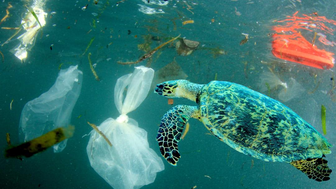 Quali sono le cause dell'inquinamento del mare?